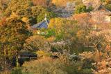 鎌倉山 らい亭庭園の桜