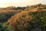 鎌倉山 山椒洞跡の山桜