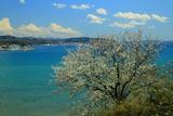 鎌倉 桜と相模湾