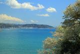 鎌倉 大島桜と相模湾