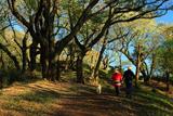 六国見山森林公園の桜