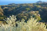六国見山から桜咲く北鎌倉の山並