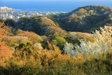 六国見山からの材木座海岸