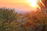 六国見山から桜越しに富士山