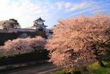 金沢城百間堀の桜