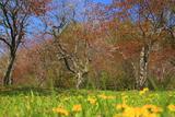 別保公園のタンポポ