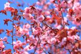 春採公園の釧路八重