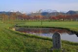 羅臼町 自然とみどりの村の桜