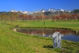 羅臼峠の桜
