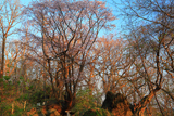 有珠善光寺の石割桜