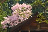 札幌市 開拓神社拝殿