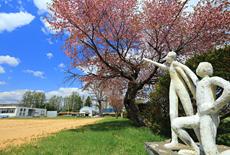 人舞小学校の桜