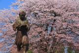 上居辺小学校の桜