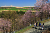 上富良野町 深山峠さくら園の報徳道路