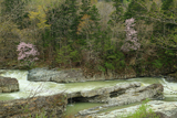 芦別市 三段滝の桜