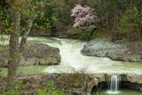 三段滝の桜