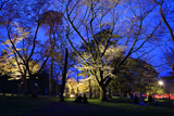 旭川市 旭山公園の夜桜