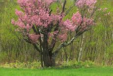 小清水町保存樹木1号