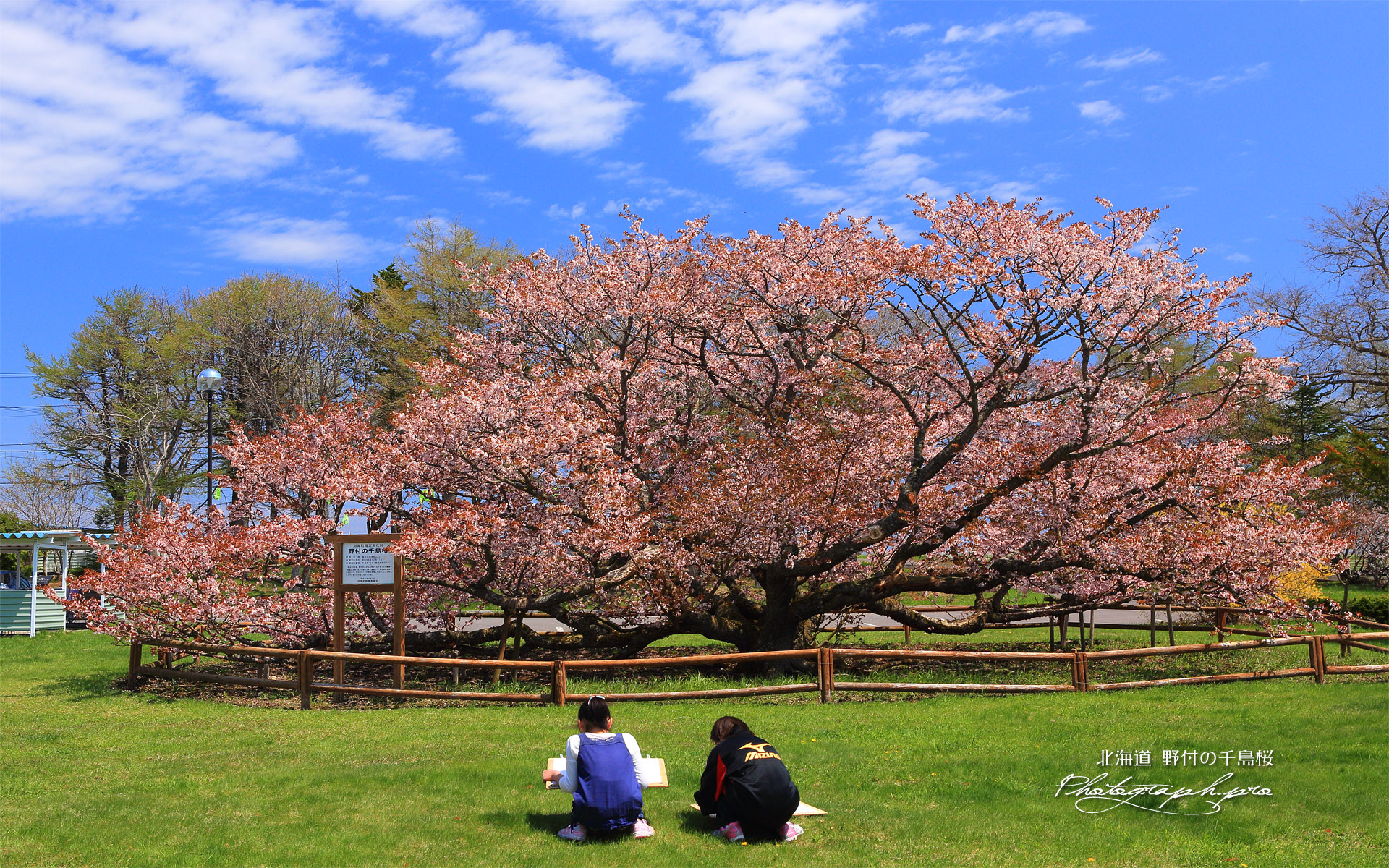 野付の千島桜