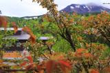 旭岳温泉の桜