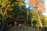 京都岩倉 雑木紅葉の山住神社