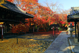 松ケ崎大黒天 絵馬堂と敷紅葉の妙円寺