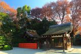 久我神社 大宮の森の雑木紅葉