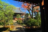 佛陀寺 桜紅葉と本堂