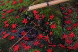 本満寺 蹲踞の散り紅葉