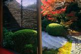 閑臥庵 簾と紅葉