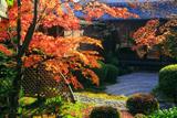 閑臥庵 紅葉の枯山水庭園