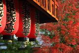 石像寺 地蔵堂の提燈と紅葉