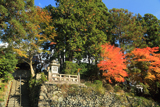 小町寺 紅葉と本堂