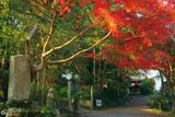 京都岩倉 紅葉の大雲寺