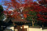岩倉具視幽棲旧宅 紅葉と表門