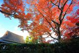 岩倉具視幽棲旧宅 紅葉と茅葺き屋根の主屋