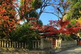 京都熊野神社 紅葉