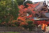 京都熊野神社 桜紅葉と本殿