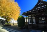 延命寺 本堂と大銀杏黄葉