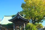 金沢安立寺 鐘楼と黄葉した高木