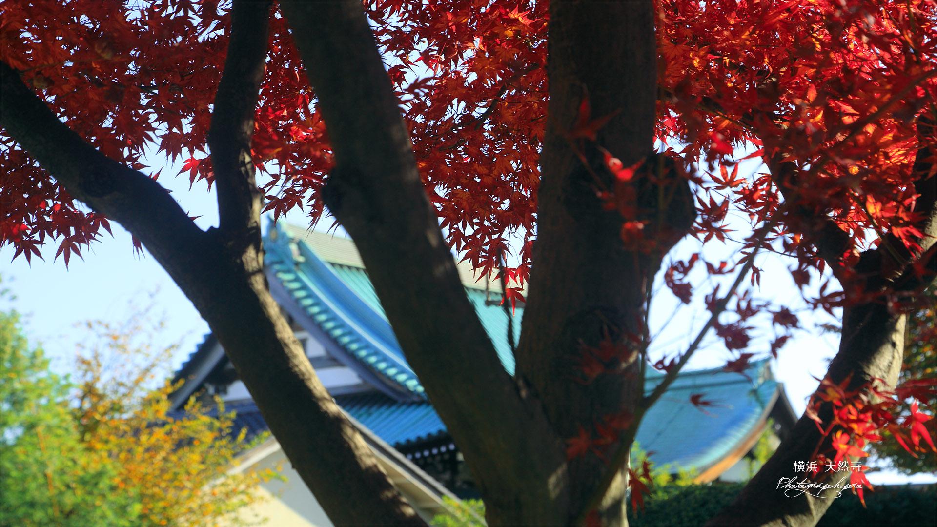 天然寺 紅葉越しの本堂