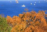 野島公園 雑木紅葉越しの東京湾