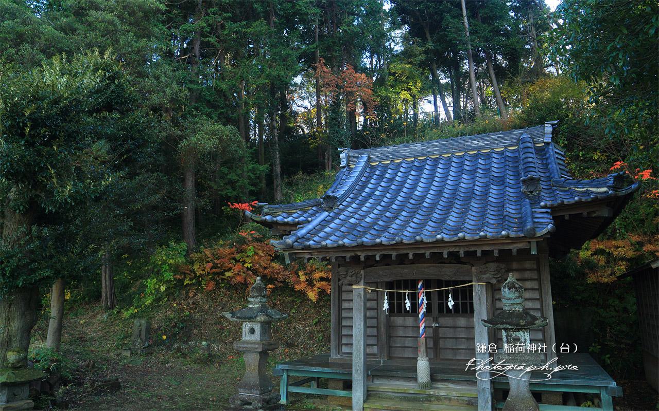 鎌倉台上町 雑木紅葉の稲荷神社 壁紙