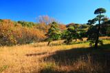 鎌倉城廻 打越の草黄葉