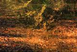 鎌倉城廻 玉縄城跡の黄朽葉色の水面
