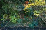 鎌倉関谷 雑木紅葉と関谷川