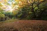 鎌倉 雑木黄葉の関谷緑地溜池