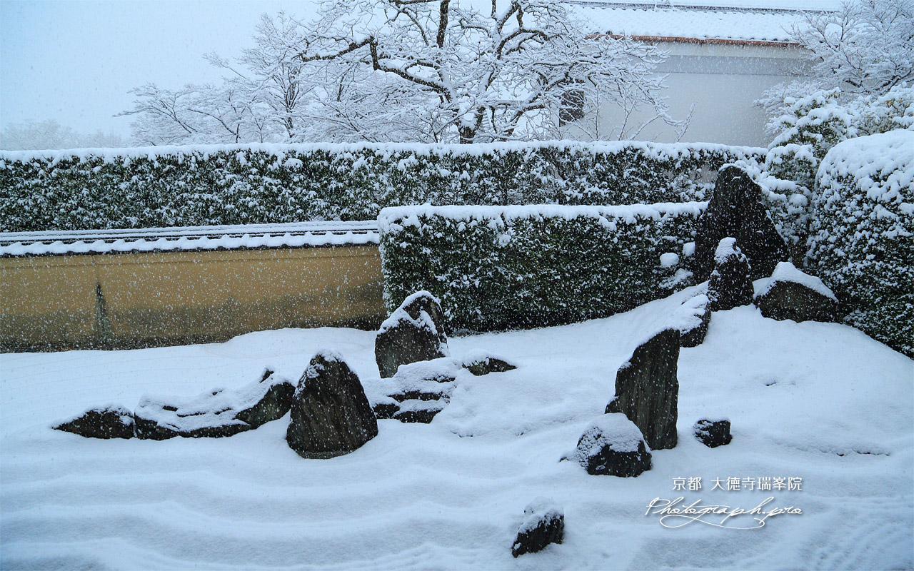 瑞峯院 雪降る独坐庭 壁紙