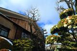 寺田屋 残雪とツバキ