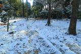 妙光寺 雪化粧の参道